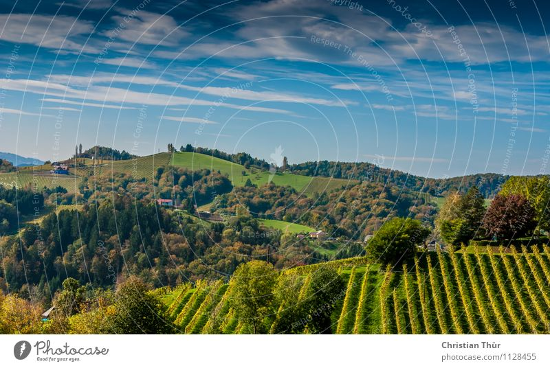 Hilly panorama Alcoholic drinks Wine Wellness Life Harmonious Well-being Contentment Senses Meditation Vacation & Travel Tourism Trip Summer Summer vacation