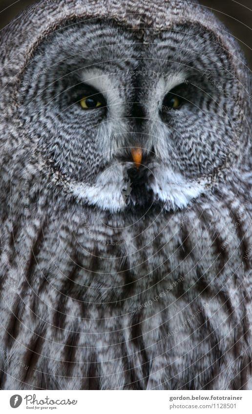 Nature Blue Animal Black Bird Wild animal Observe Protection Watchfulness Creepy Silver Pride Owl birds