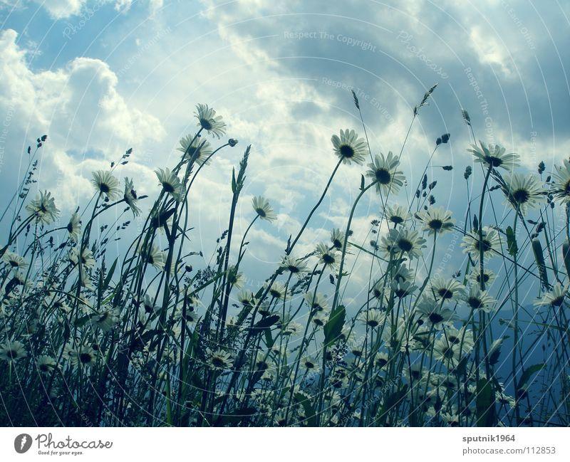 Sky Flower Summer Vacation & Travel Meadow Grass Alps Thunder and lightning