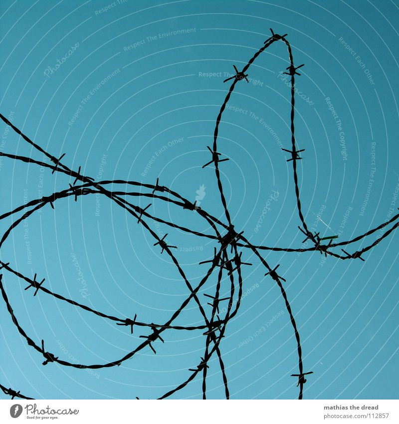 barbed wire Wire Barbed wire Rolled Round Muddled Traffic infrastructure Fear Panic Thorn Protection Defensive Point Curve Rotate aggro aggressive Sky Blue