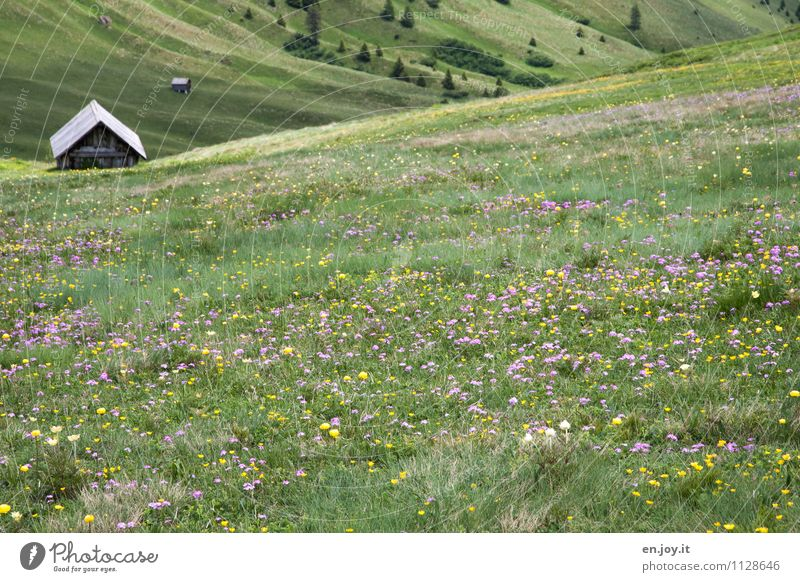Nature Vacation & Travel Plant Green Summer Relaxation Landscape Calm Mountain Spring Meadow Tourism Happiness Blossoming Romance Adventure