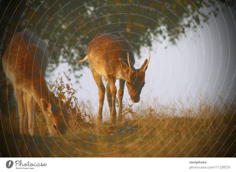 fallow deers with instagram effect Beautiful Hunting Woman Adults Man Nature Landscape Animal Grass Park Meadow Forest Herd To feed Bright Natural Cute Wild