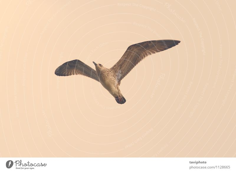 vintage style image of a gull Sky Nature Old Beautiful Summer Ocean Coast Style Freedom Bird Wild Design Wing Vantage point Photography Retro