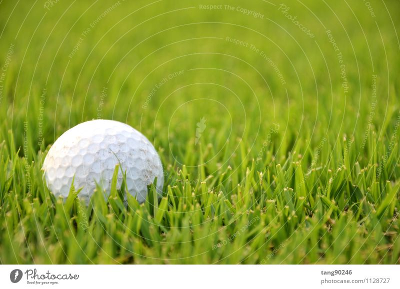Dirty golf ball on the grass with green background White Relaxation Sports Playing Leisure and hobbies Earth Action Sphere Golf Competition Entertainment