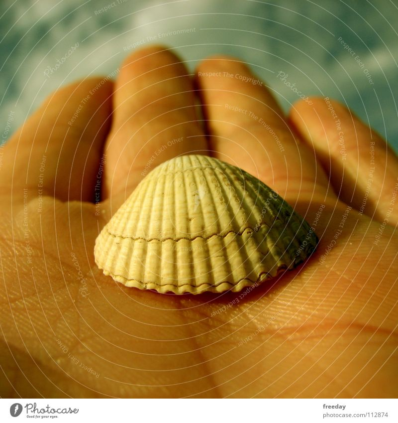 ::: Shell ::: Environment Mussel Hand Clouds Fingers Pattern Lake Ocean Seafood Beach Background picture Opening Lime Jewellery Macro (Extreme close-up)