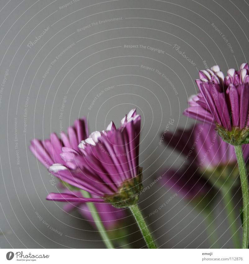 Nature Plant Flower Colour Gray Spring Growth New Gloomy Change Violet Blossoming Square Watchfulness Bud