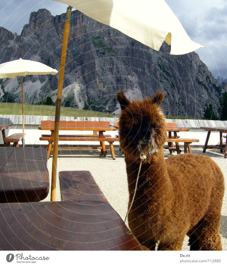 White Summer Vacation & Travel Calm Clouds Animal Relaxation Mountain Brown Table Bench Soft Sunshade Beautiful weather Mammal Italy
