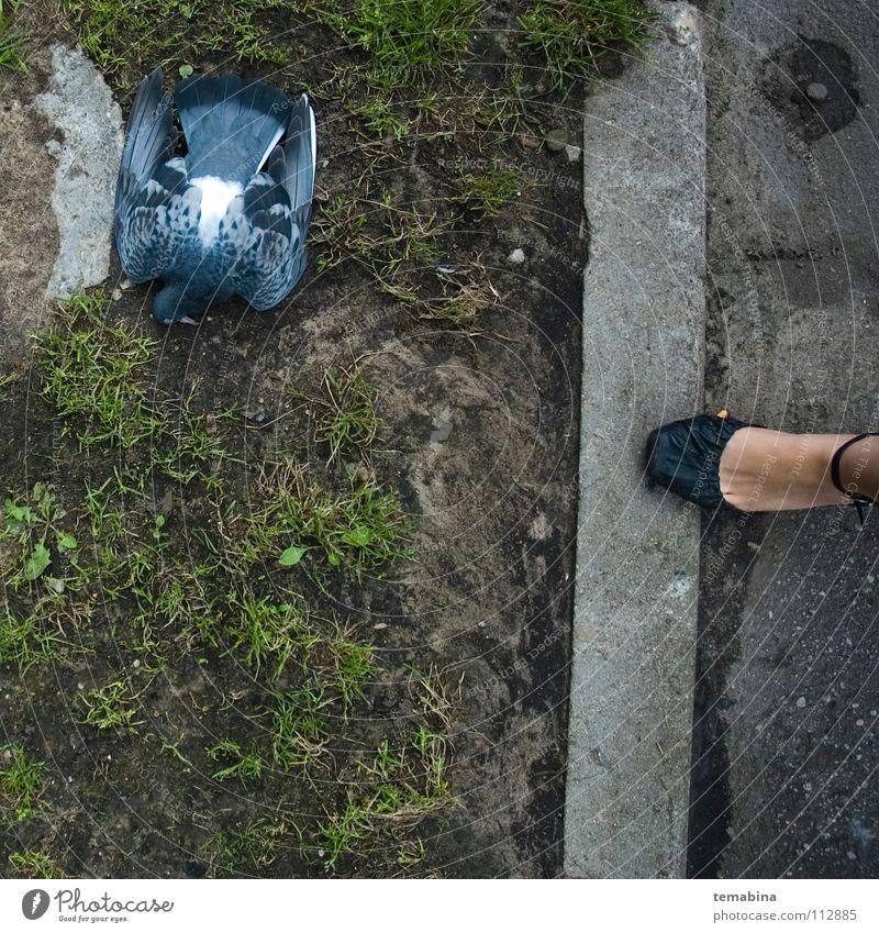 Dead Pigeon Town Bird dead pigeon grass street woman's leg body part death animal To fall