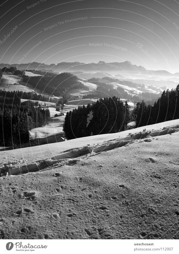 the st.galler winter Winter Forest Mount Säntis Tracks Cold White Black Switzerland Black & white photo Panorama (View) Mountain egge panoramic view Fog