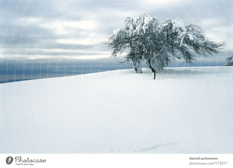 Christmas card 12 Black Forest White Deep snow Hiking Leisure and hobbies Vacation & Travel Jinxed Mystic Abstract Background picture Snowscape Loneliness