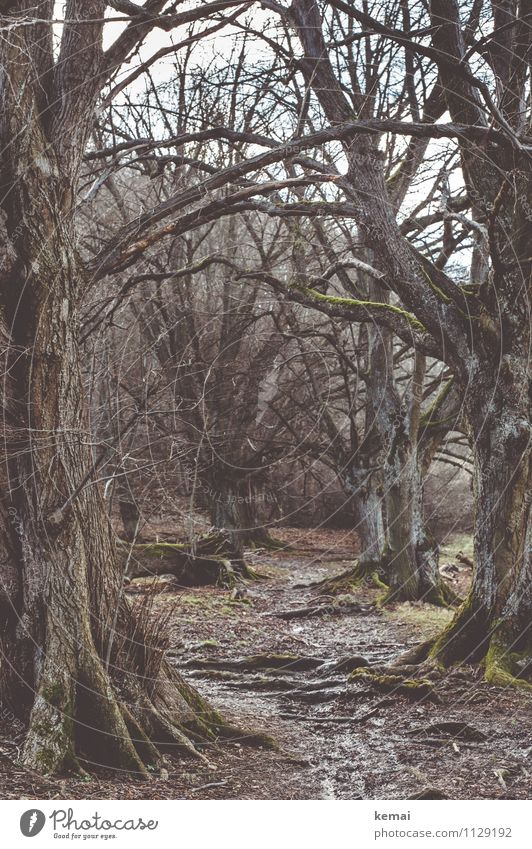 Nature Old Plant Tree Loneliness Landscape Calm Dark Forest Environment Emotions Spring Lanes & trails Exceptional Earth Large