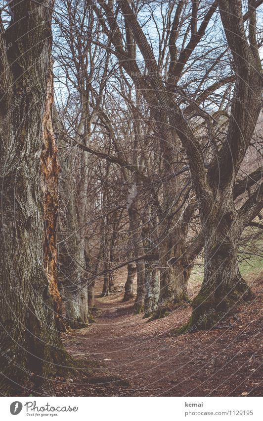 Nature Old Plant Tree Loneliness Landscape Forest Environment Spring Lanes & trails Exceptional Earth Tall Large Branch Beautiful weather