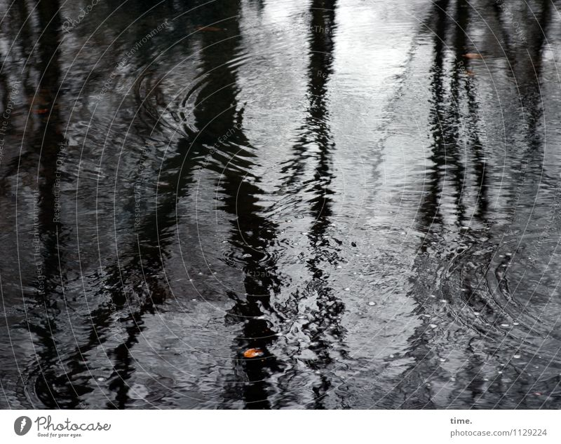 Hamburg early spring Environment Nature Landscape Water Drops of water Bad weather Tree Leaf Puddle Cold Wet Sadness Concern Grief Fatigue Reluctance