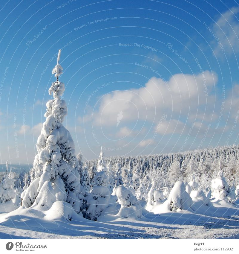 Sky Beautiful White Tree Joy Winter Forest Cold Graffiti Snow Playing Moody Beginning Target Hut End