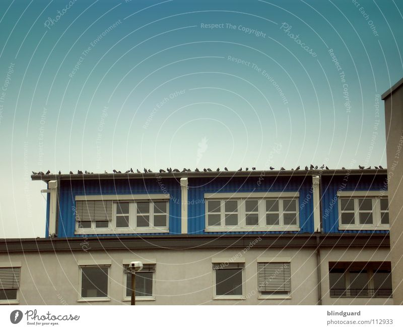 Monday morning meeting House (Residential Structure) Facade Window Sky Downspout Pigeon Bird Meeting Assembly Multiple Demonstration Corner Roller blind
