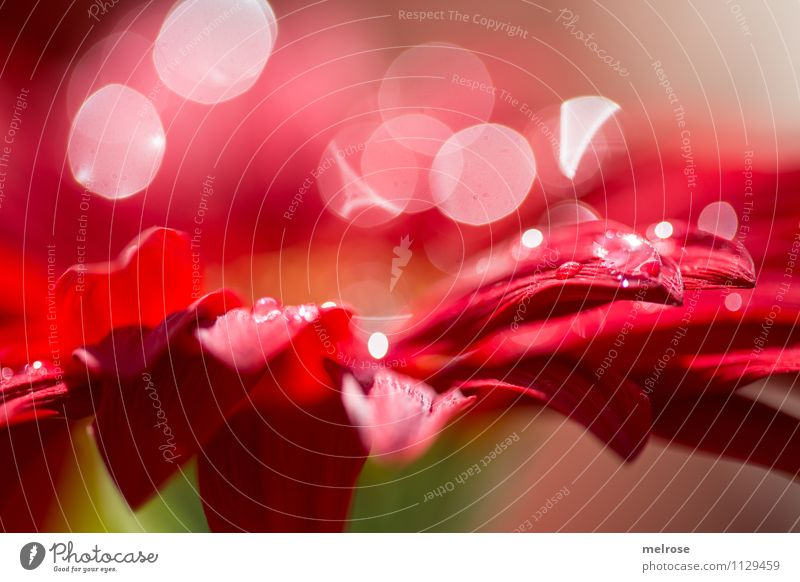 Nature Beautiful Green White Relaxation Flower Red Calm Emotions Spring Blossom Style Moody Glittering Dream Illuminate