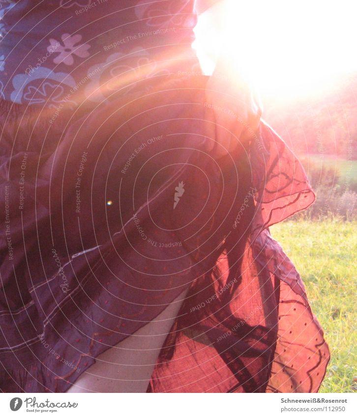 Nature Sun Autumn Meadow Dance Point Flowery pattern