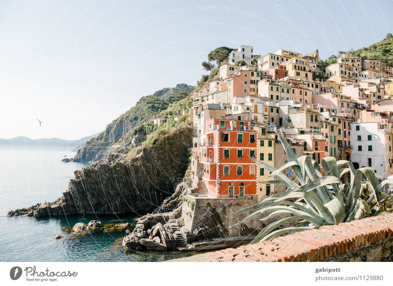 CINQUE TERRE Contentment Senses Relaxation Vacation & Travel Tourism Trip Adventure Far-off places Sightseeing City trip Cruise Summer Summer vacation Sun
