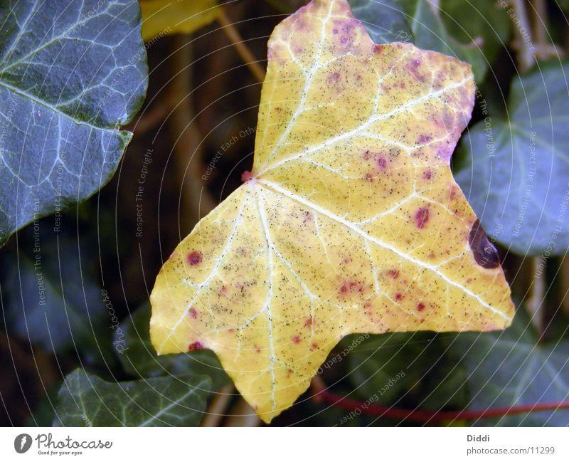 leafy Leaf Autumn Tree Plant Eveu