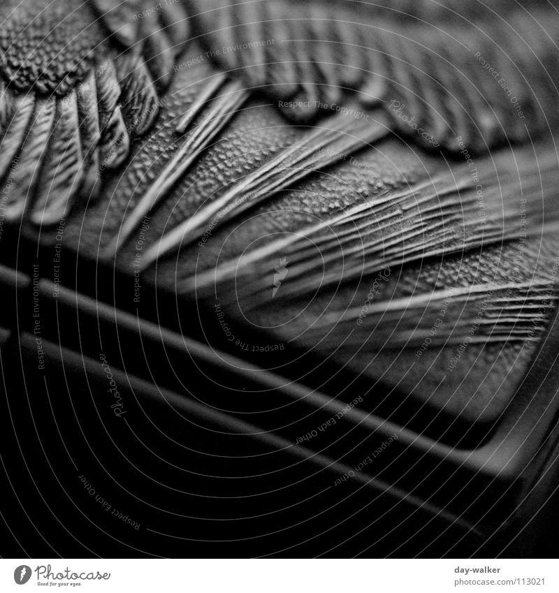 White Black Dark Metal Feather Surface Exposure Reaction Eagle Gravure