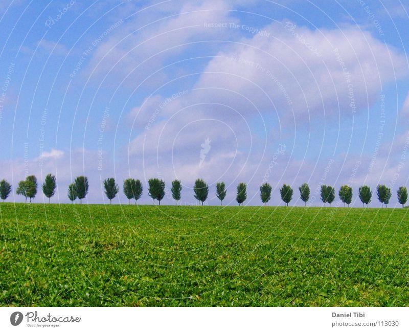 Sky Tree Green Blue Summer Far-off places Grass Freedom Arrangement