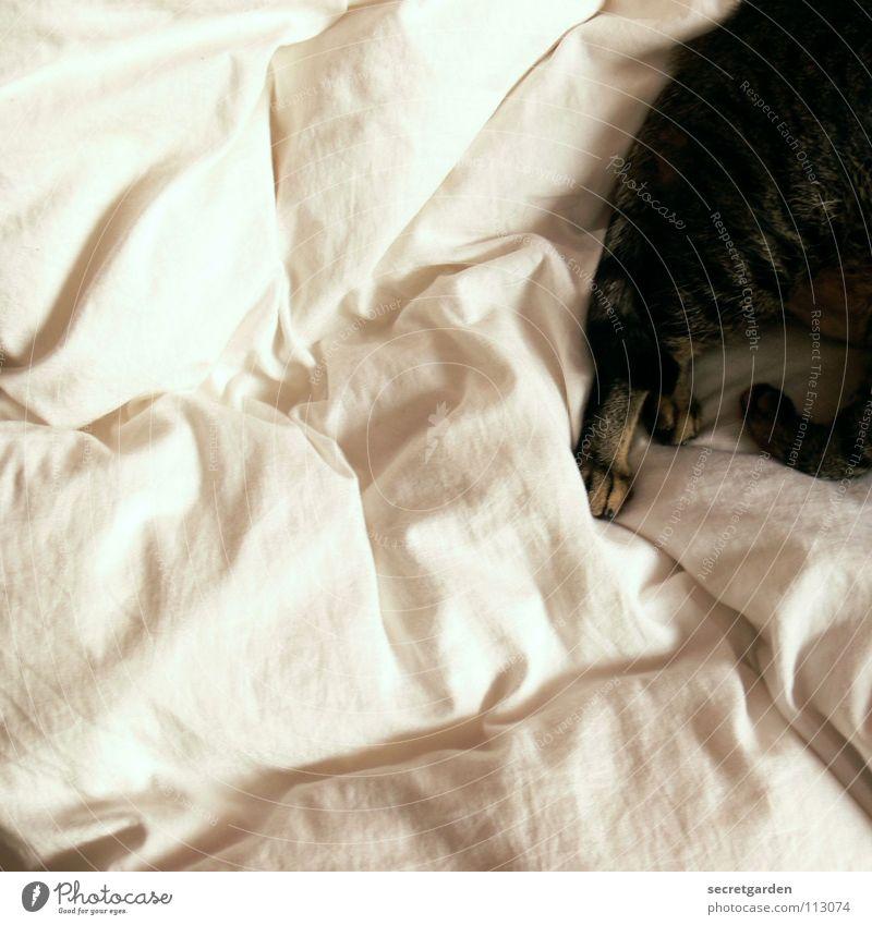 Beautiful White Joy Animal Cat Warmth Room Together Wait Flat (apartment) Design Sleep Bed Peace Physics Furniture