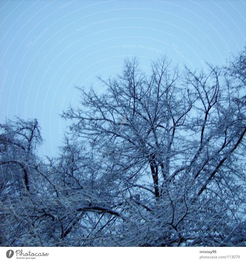 Nature Sky Tree Blue Joy Winter Calm Cold Snow Happy Contentment Clarity