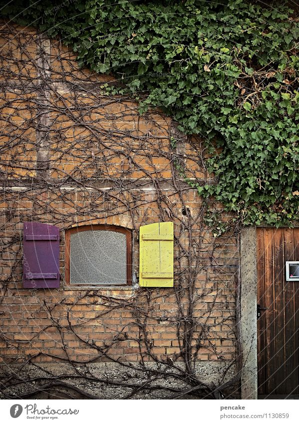 fine Nature Plant Ivy Village House (Residential Structure) Wall (barrier) Wall (building) Facade Window Door Authentic Natural Retro Design Relaxation Culture