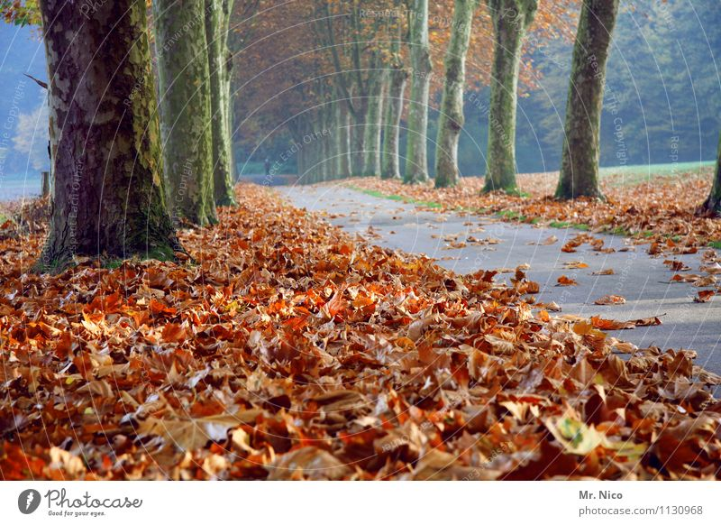 the next autumn will come for sure Environment Nature Autumn Tree Leaf Street Lanes & trails Loneliness Autumn leaves Autumnal colours Avenue Promenade