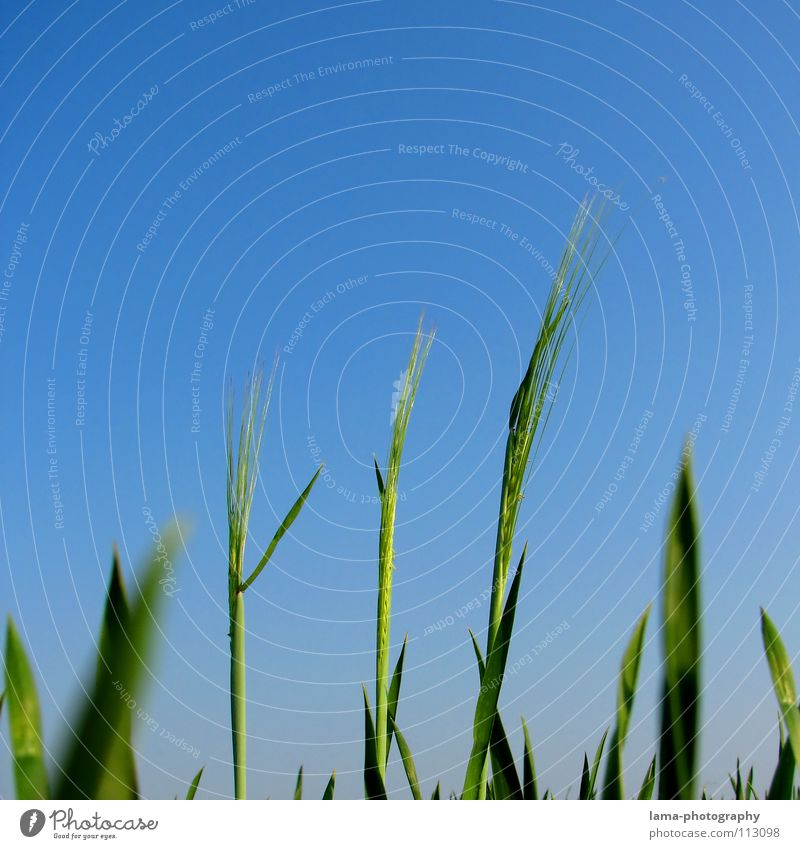Sky Nature Blue Summer Meadow Life Grass Small Spring Weather Field Wind Large Success Growth Simple