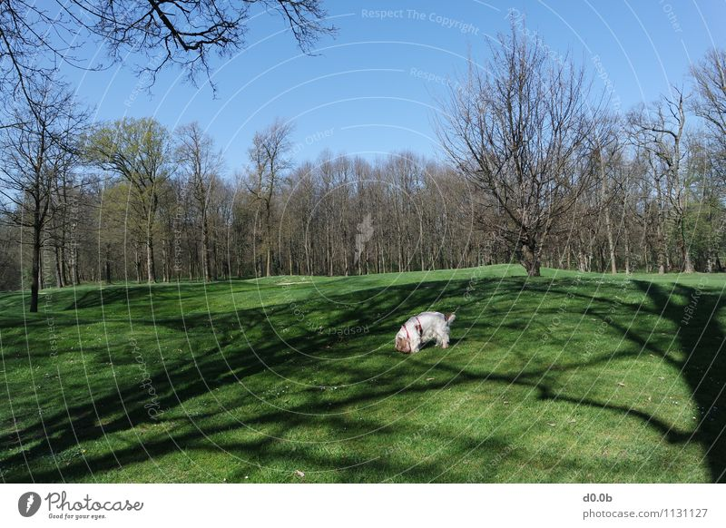 GRASS GREEN GOLF COURSE Golf course Tree Park Pet Dog 1 Animal Authentic Simple Beautiful Natural Cute Blue Brown Green White Peaceful Relaxation Serene Life