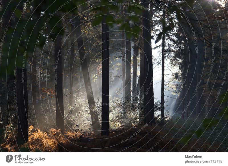 Tree Sun Forest Sunbeam Autumn Wood Warmth Rope Bushes Radiation Sunlight Mystic Pteridopsida Undergrowth Wood flour Bright spot