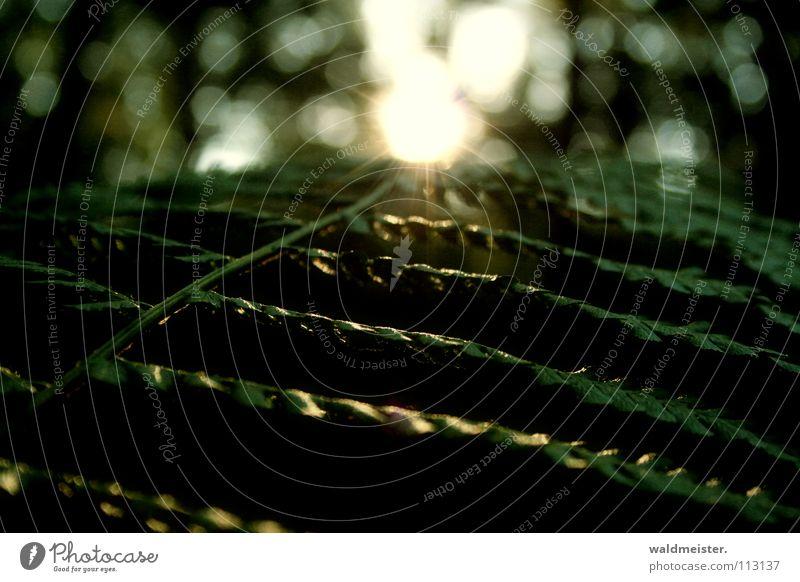 fern leaf Leaf Back-light Dark Forest Woodground Summer Autumn Green Pteridopsida Sun