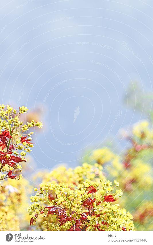 Sky Nature Plant Blue Summer Flower Calm Yellow Blossom Spring Happy Garden Lifestyle Contentment Living or residing Tourism