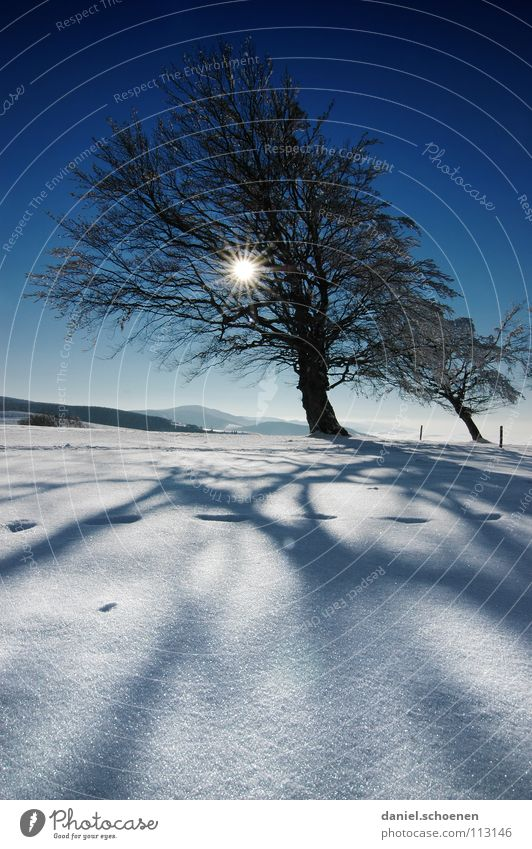 Christmas card 13 Sunbeam Winter Black Forest White Deep snow Hiking Leisure and hobbies Vacation & Travel Background picture Tree Snowscape Horizon Loneliness