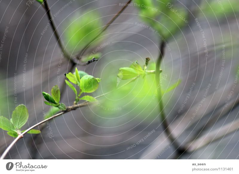 BEAM Spring! Life Environment Nature Plant Climate Tree Leaf Branch Beech tree Blossoming Illuminate Growth Esthetic Authentic Friendliness Fresh Natural Gray