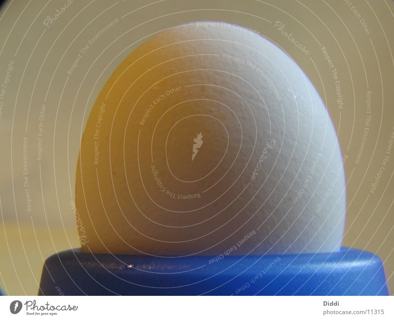 The egg Barn fowl Yolk Mug Egg Bowl