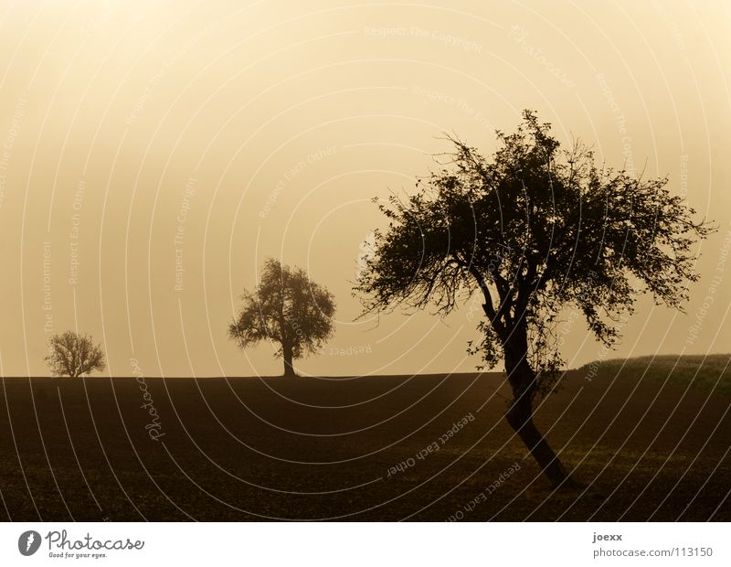 Three in the fog 3 Field Tree Row of trees Brown Relaxation Autumn Idyll Morning Think Fog Wall of fog Unclear Fruit trees Poetic Romance Calm Solar Power