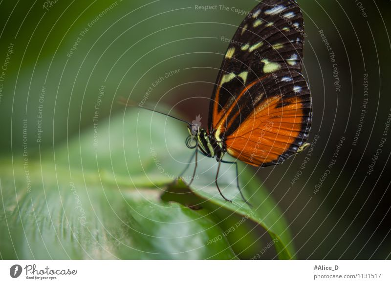 Majesties of Nature Elegant Environment Plant Animal Spring Summer Leaf Exotic Wild animal Butterfly Flying insect Insect Miracle of Nature 1 Green Orange