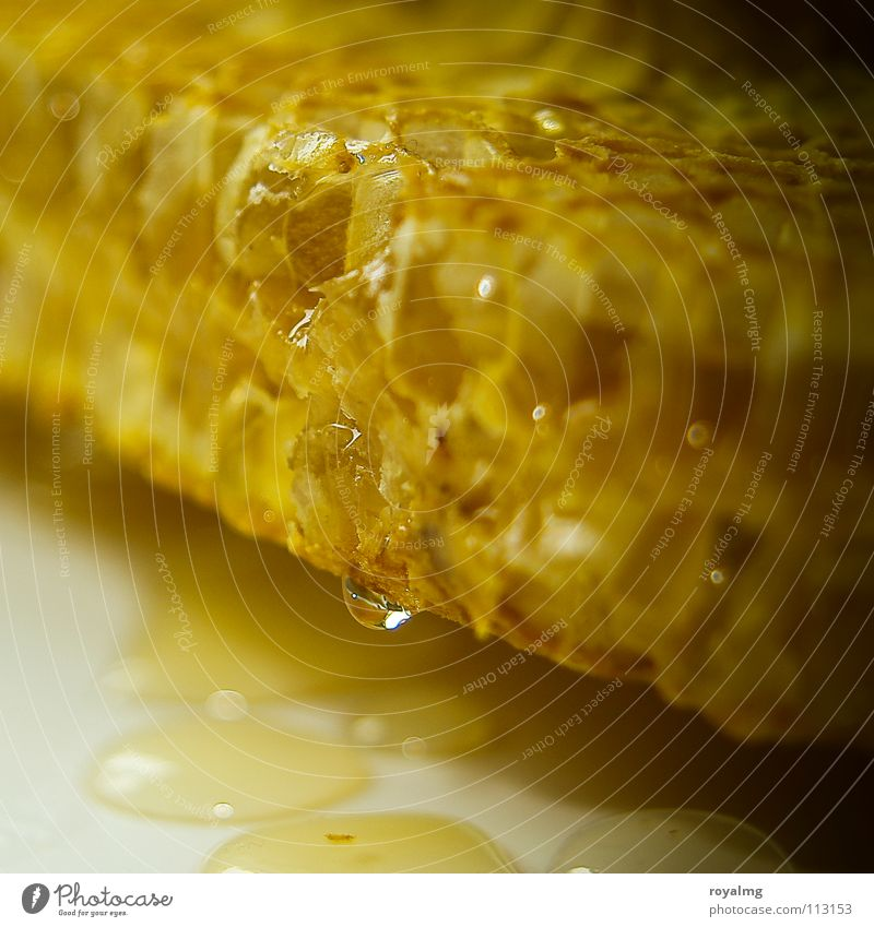 Nature Yellow Nutrition Drops of water Sweet Bee Diligent Honey Honey-comb Royal Bee-keeper Syrup
