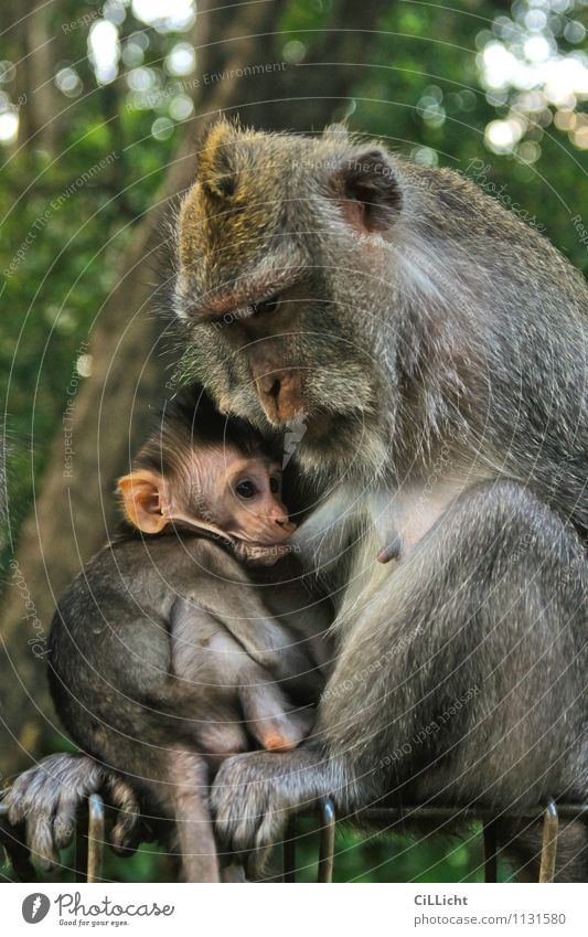 meal Baby Mother Adults Nature Wild animal Animal face Monkeys 2 Animal family Drinking Brown Gray Green Trust Safety (feeling of) Love of animals