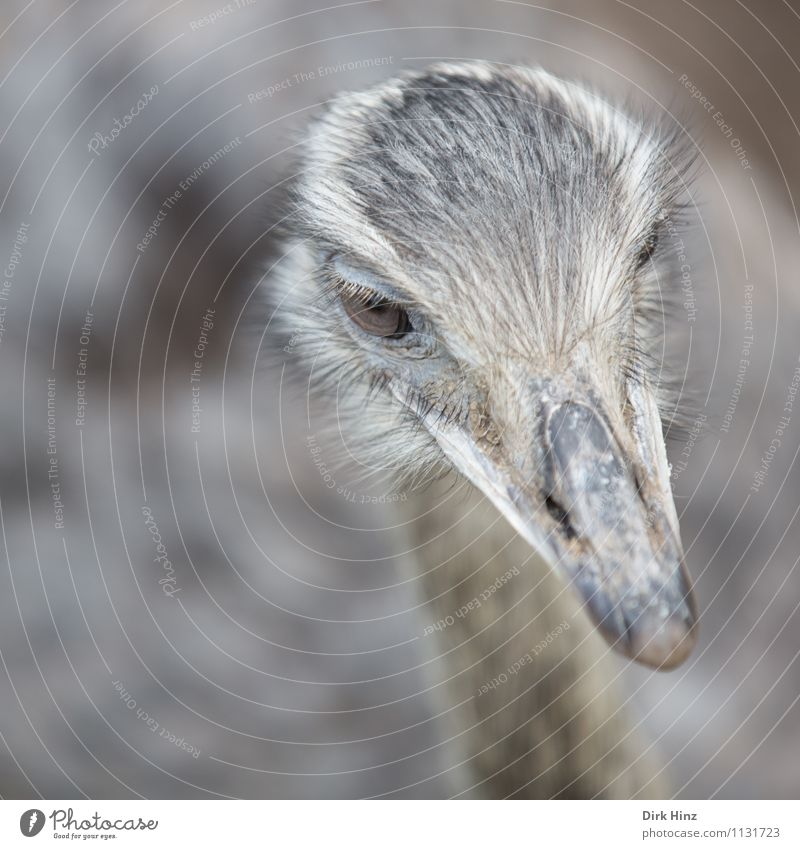 bouquet Animal Farm animal Wild animal Bird Animal face Wing Zoo 1 Gray Environmental protection Ostrich Trip Nature Observe Head Eyes Tourism Attraction