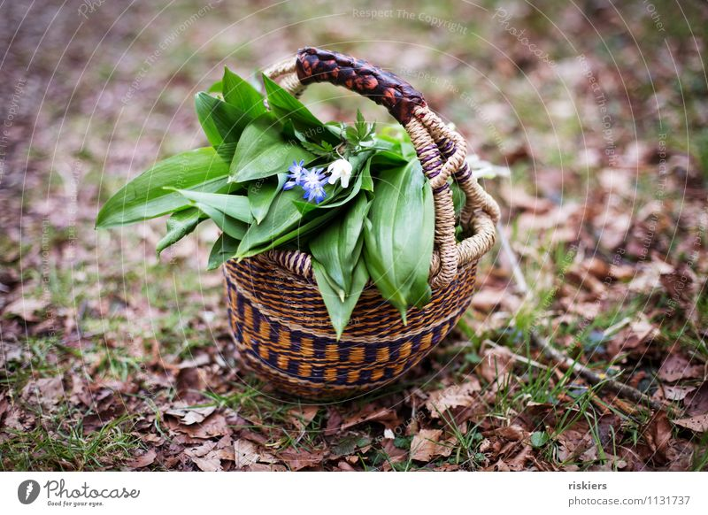 Today there's bear tube soup ii Environment Nature Plant Spring Wild plant Club moss Herbs and spices Forest Aggravation Basket Flower Colour photo