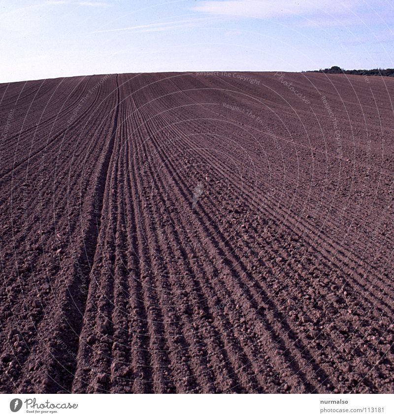 FAR Field Crops Dimension Ruler Parallel Smoothness Consistent Agriculture Autumn Blade of grass Rapes Mecklenburg-Western Pomerania Furrow topsoil egge