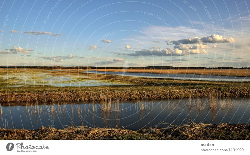 alluvial land Nature Landscape Plant Water Sky Clouds Horizon Sunlight Spring Weather Beautiful weather Grass Meadow Coast Lakeside River bank Bog Marsh Pond