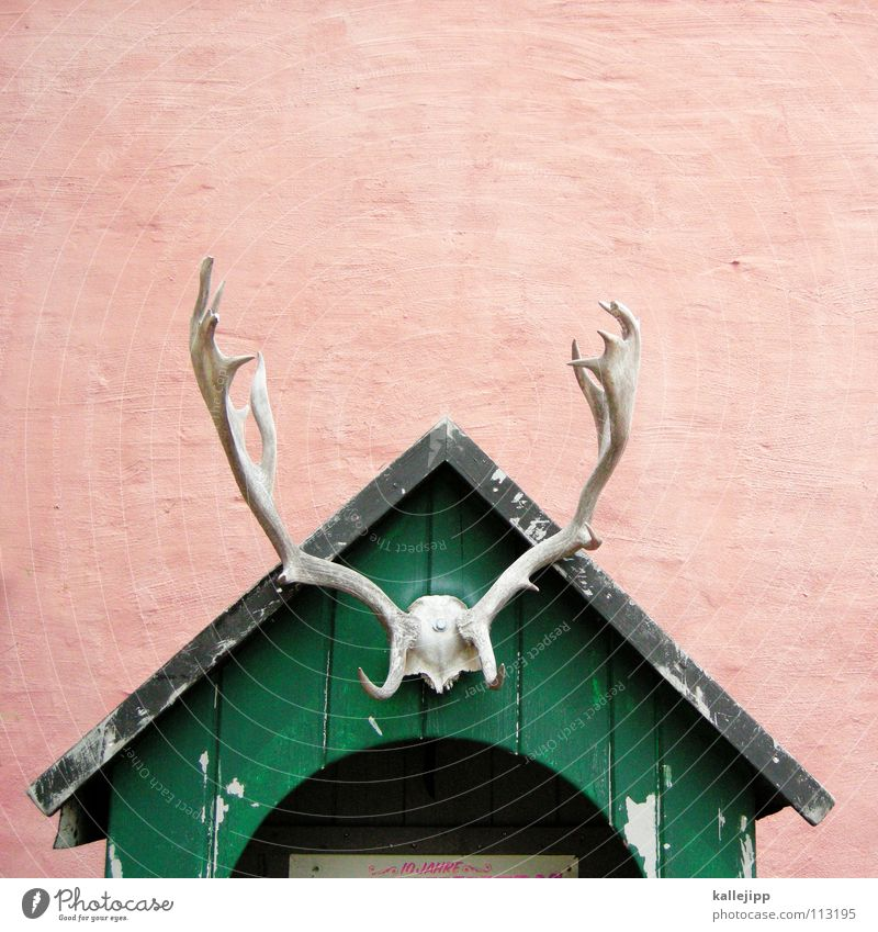 the house from... Antlers Wooden hut Dead animal Trophy Bright background Isolated Image Copy Space top Central perspective Wooden roof Gable end Reindeer