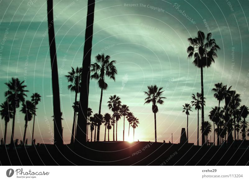 Nature Sky Sun Green Summer Vacation & Travel Black Dark Relaxation Emotions Club Palm tree