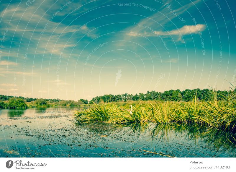 Lake with a swan Beautiful Vacation & Travel Summer Mirror Environment Nature Landscape Plant Sky Clouds Tree Grass Leaf Pond River Bird Swan Fresh Bright