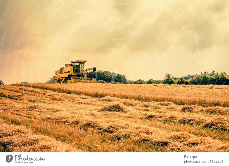 Harvester on a field Summer Work and employment Machinery Nature Landscape Plant Autumn Growth Hot Yellow Gold Colour orange Farm ripe food machine grain Rural