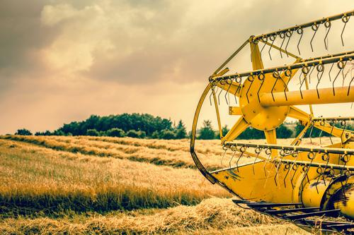Harvester rear on a field Nature Plant Colour Summer Landscape Yellow Autumn Work and employment Growth Gold Ground Farm Hot Agriculture Farmer